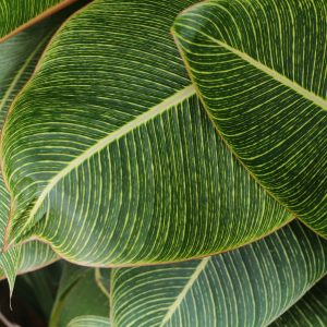 Canva - Close-Up Photography of Green Leaves